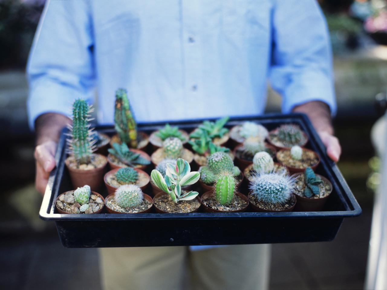 plante suculente apartament nou